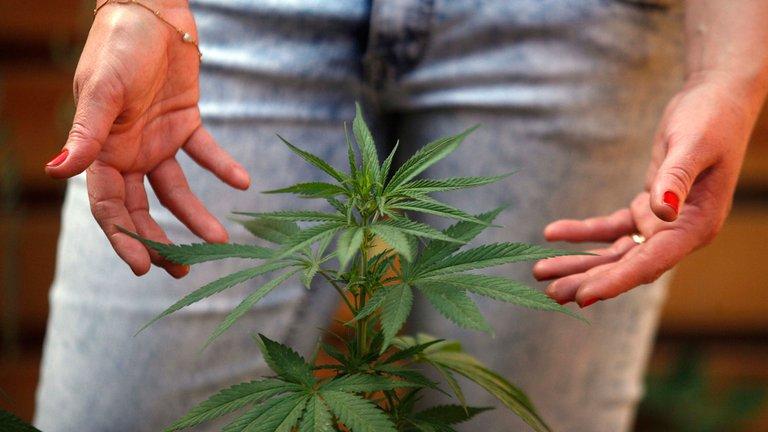 cannabis medicinal 2