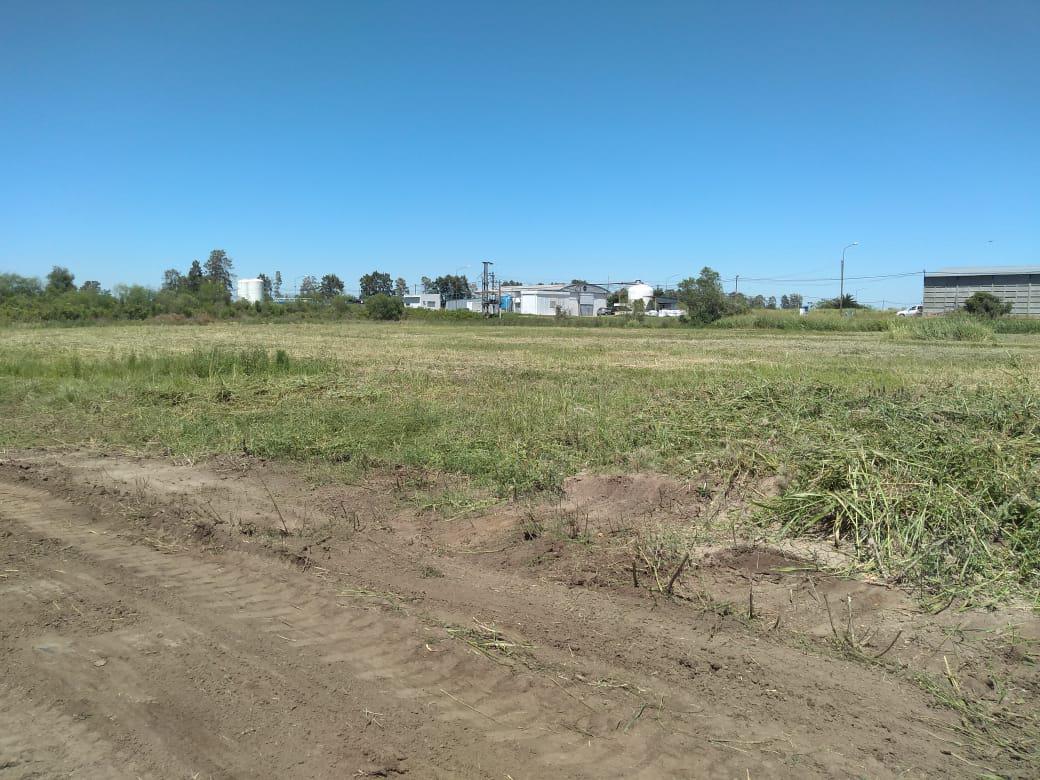 parque municipal 2